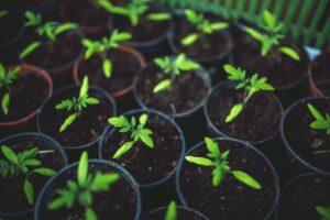 garden landscape stock